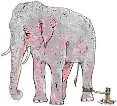 olifant aan paaltje